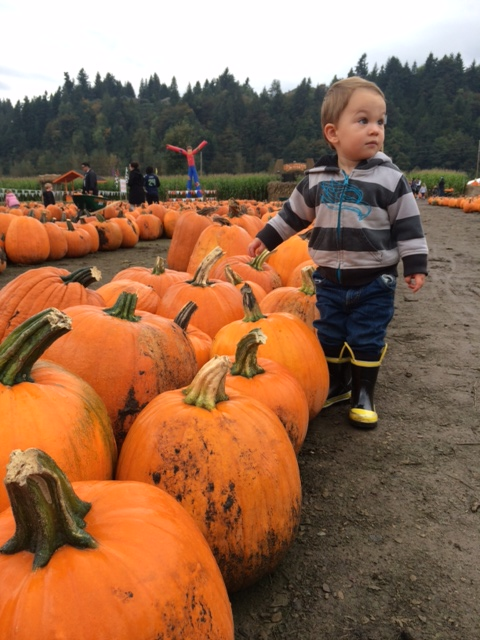 First time to the pumpkin patch.